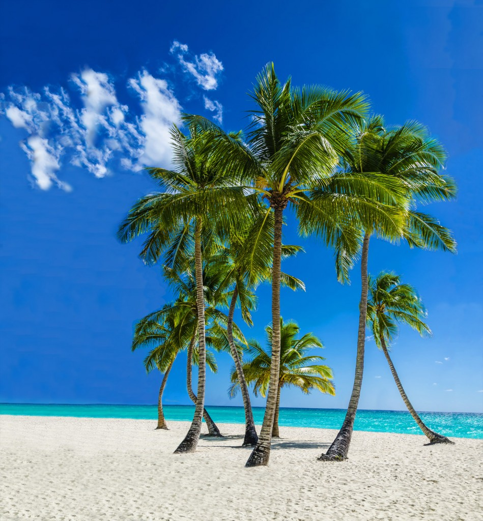 Coconut Club Vacations Reviews The Best Aruba Beaches